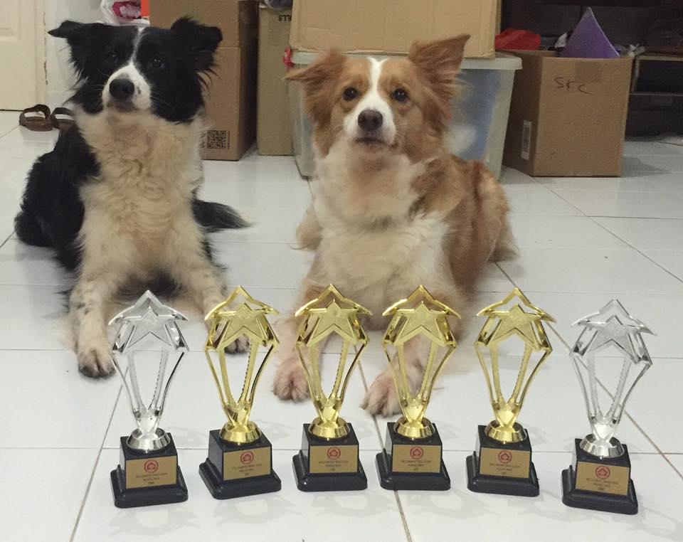 Millie & Guinness Wins, SKC