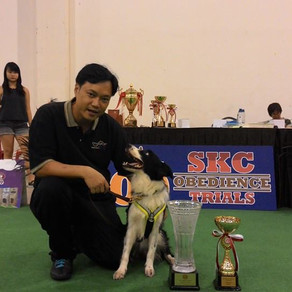 SKC 100th Obedience Trials!
