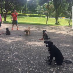 West Coast Park Obedience Class