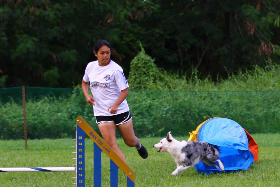 PUPS Agility Competition Class