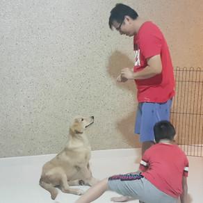 Dog Training, does it worth the money?