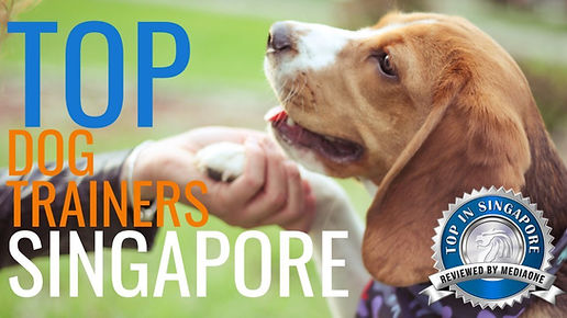 Top-Dog-Trainers-in-Singapore.jpg