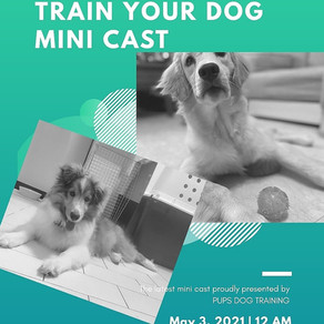 PUPS Podcast- Training what is Critical to you.