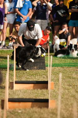 Flyball Team Demo
