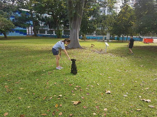 Dog Obedience Class at Katong Park