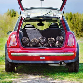 Dogs Safety Tips Travelling in Cars