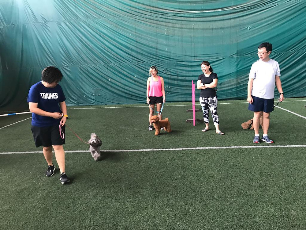 Dog Training Singapore