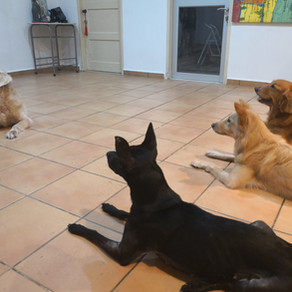 How to manage a multi-dogs household?