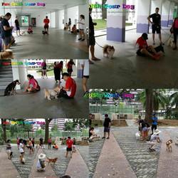 Obedience Seminar at SengKang CSC