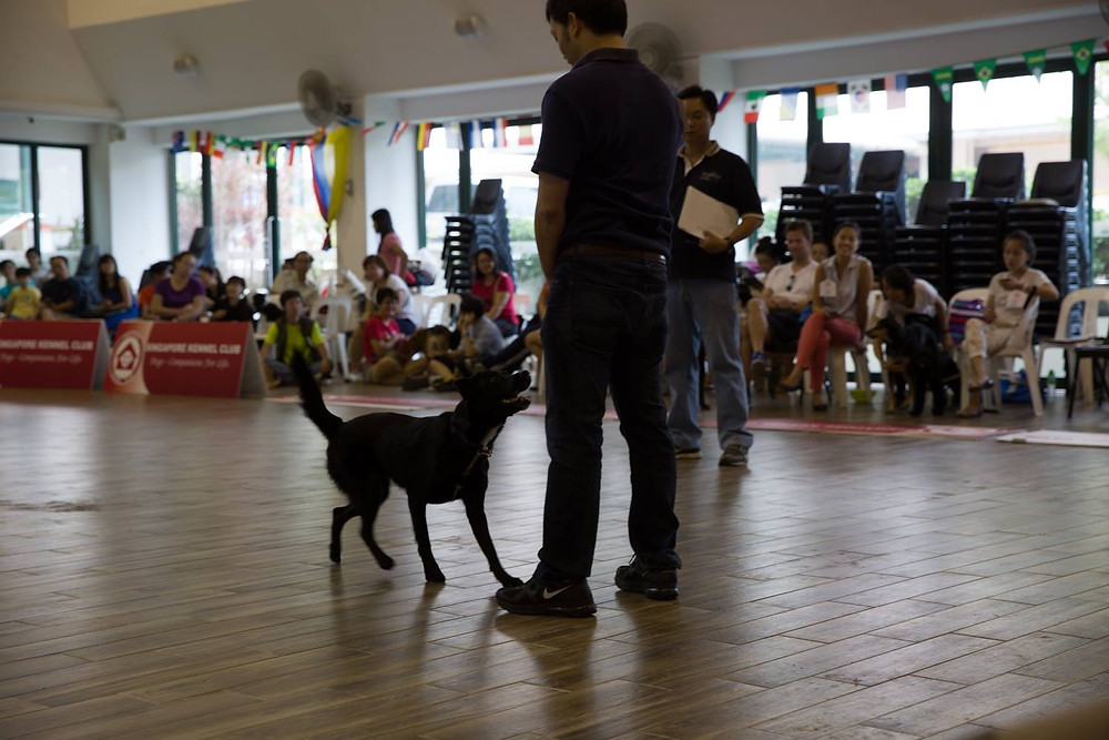 JFF Competition, Dog Obedience