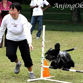 Agility: The Fun Way to an Obedient Dog.