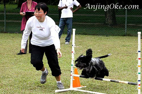 Dog Agility Training, PUPS Agility