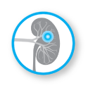 Nephrology-Icon.png