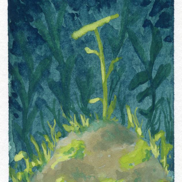 """Among the Stones"""