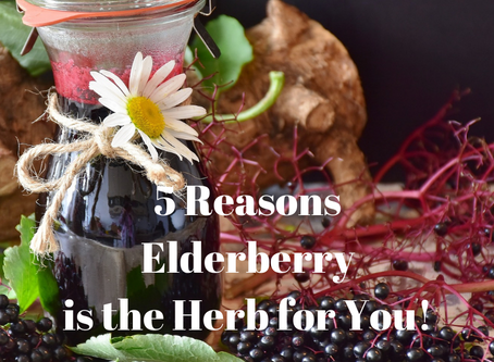 5 Reasons Elderberry is the Herb for You