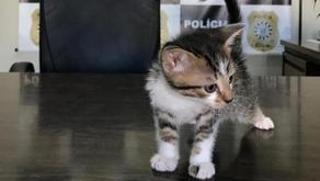 Homem confessa à polícia que adotava gatos pela internet para depois matá-los no noroeste do RS