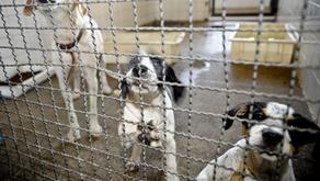 Presidente Bolsonaro sanciona lei que proíbe eutanásia de cães e gatos de rua