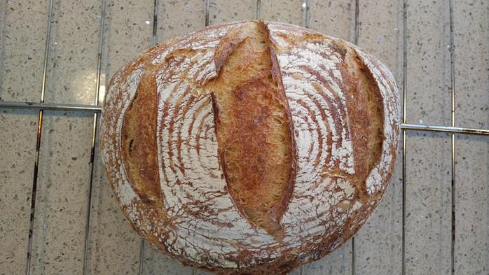 Whole Wheat Boule - Day 2