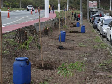 Itapevi ganha 110 novas mudas de cerejeiras