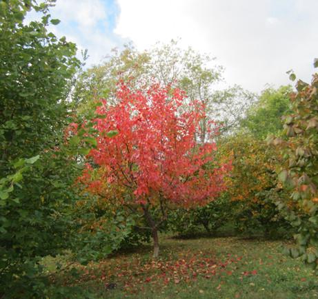 Pause to Enjoy Autumn Beauty