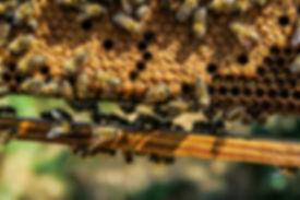Bienen_in_Waben.jpg