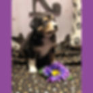 purple 8.26.jpg