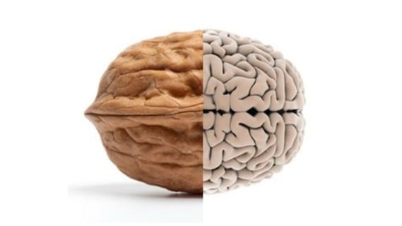 Papel da Nutrição funcional na memória