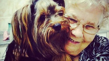 A influência da Pet Terapia
