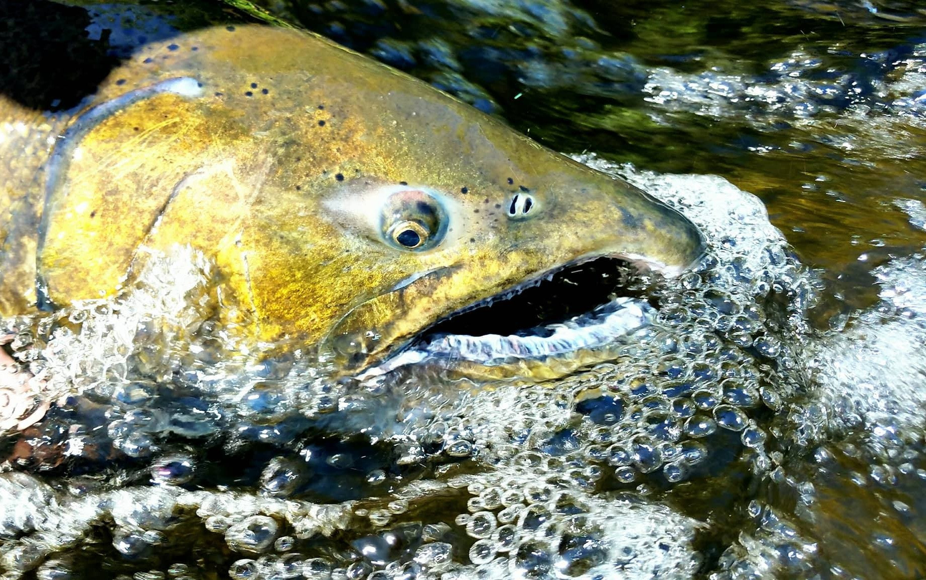 8 hour Salmon Fishing Trip