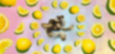 DoubleBlind-lemon-tek-SECONDARY.webp
