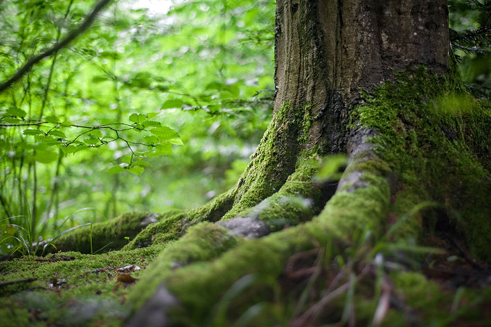 roots and moss.jpeg