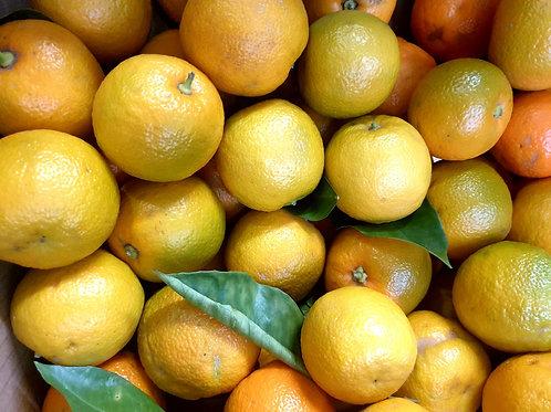 Seville Marmalade Oranges 1kg