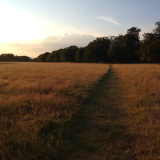 evening in Knole Park - 1.jpg