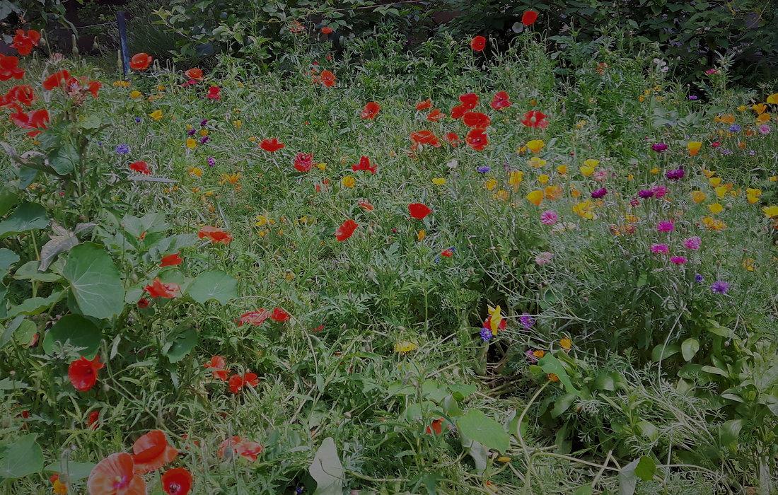 Wild Edge Garden Design, Cheltenham - Planting design