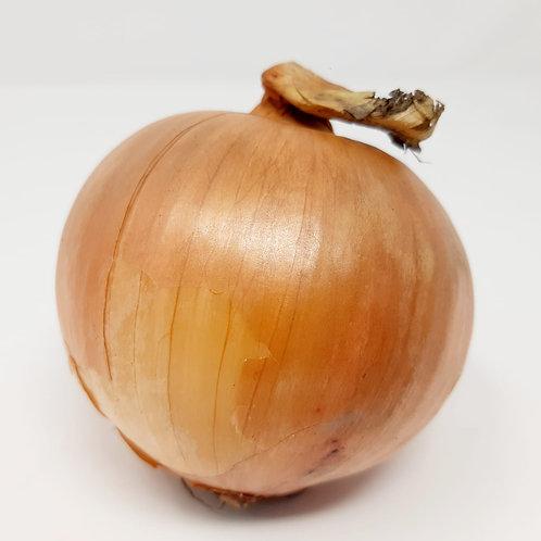 Large White Onion