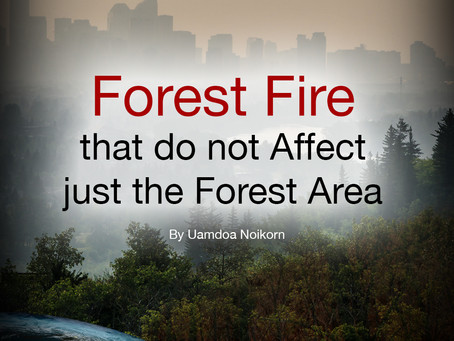 Forest Fire that do not Affect just the Forest Area