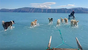 Watch: New video shows sledge dogs running on Greenland melted ice