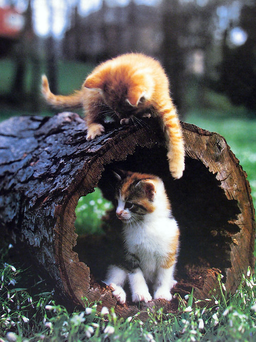 Two Kittens in the Forest