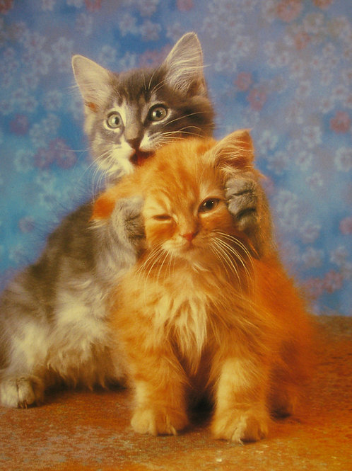 Best Kittens for Life