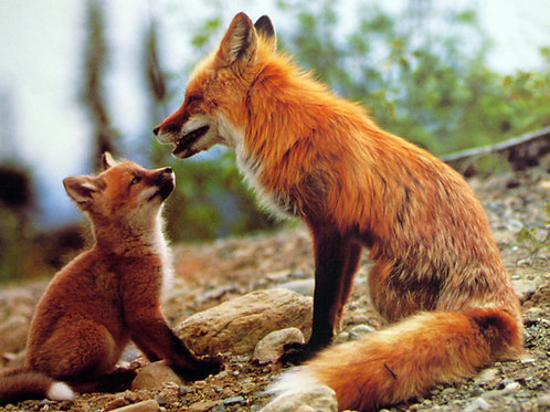 Mama Fox with Adorable Offspring