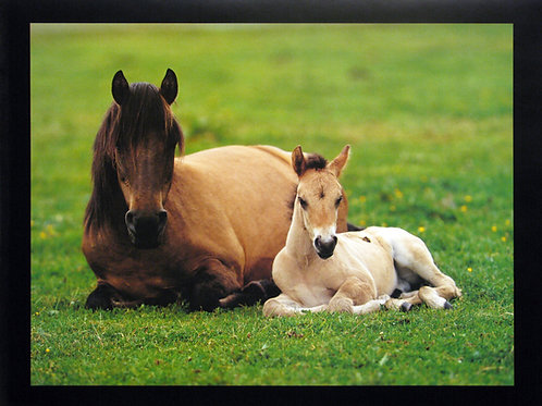 Baby Horse with Mother
