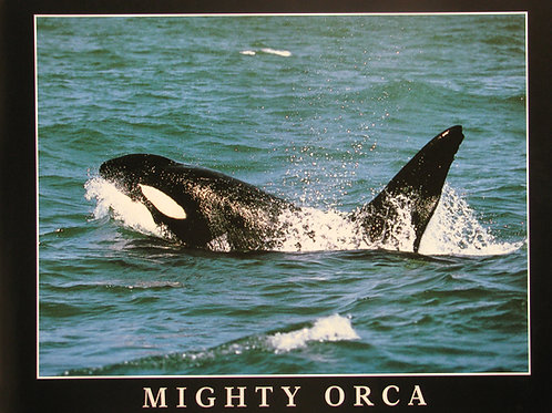 Mighty Orca