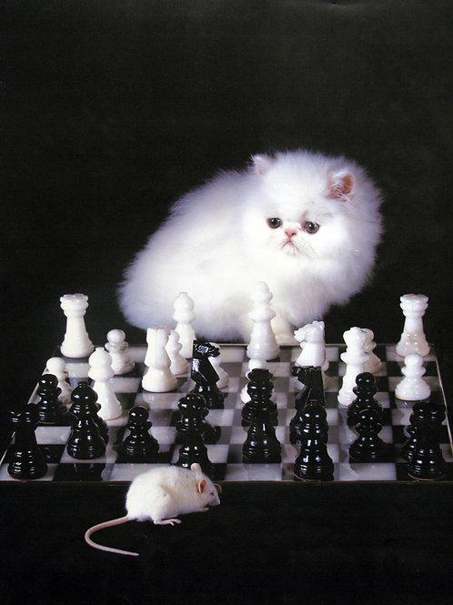 Kitten Playing Chess