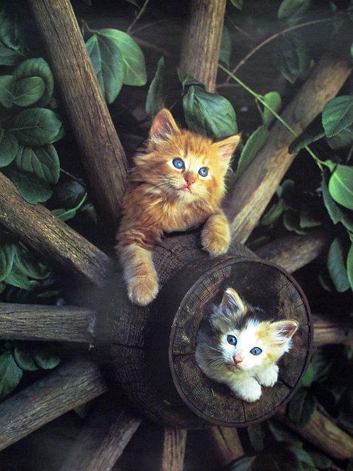 Kittens Chilling
