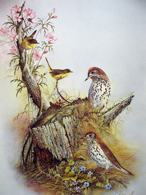 A Family of Sparrows
