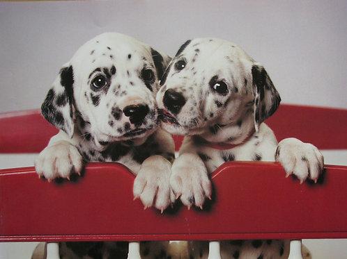 Puppy Twins