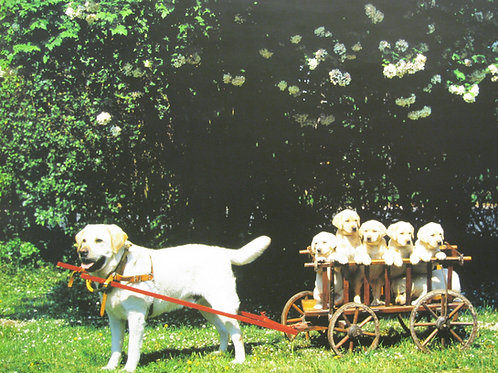 Papa Dog with Puppies