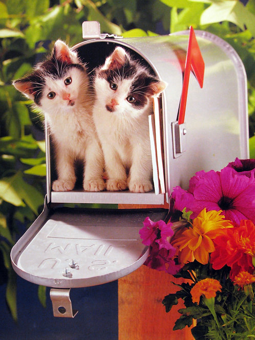 Cute Kittens in a Mailbox