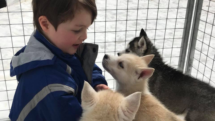 dog sled pups