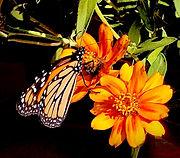 Mariposa-photoshop-crop.jpg